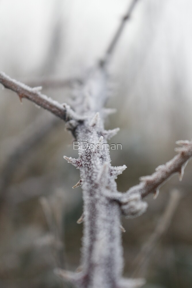 Thorns with Frost by BDodman