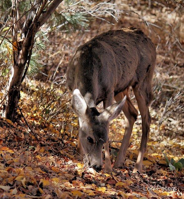 Mule Deer Doe 2 by Lori Peters