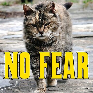 No Fear Cat by thecattshirts
