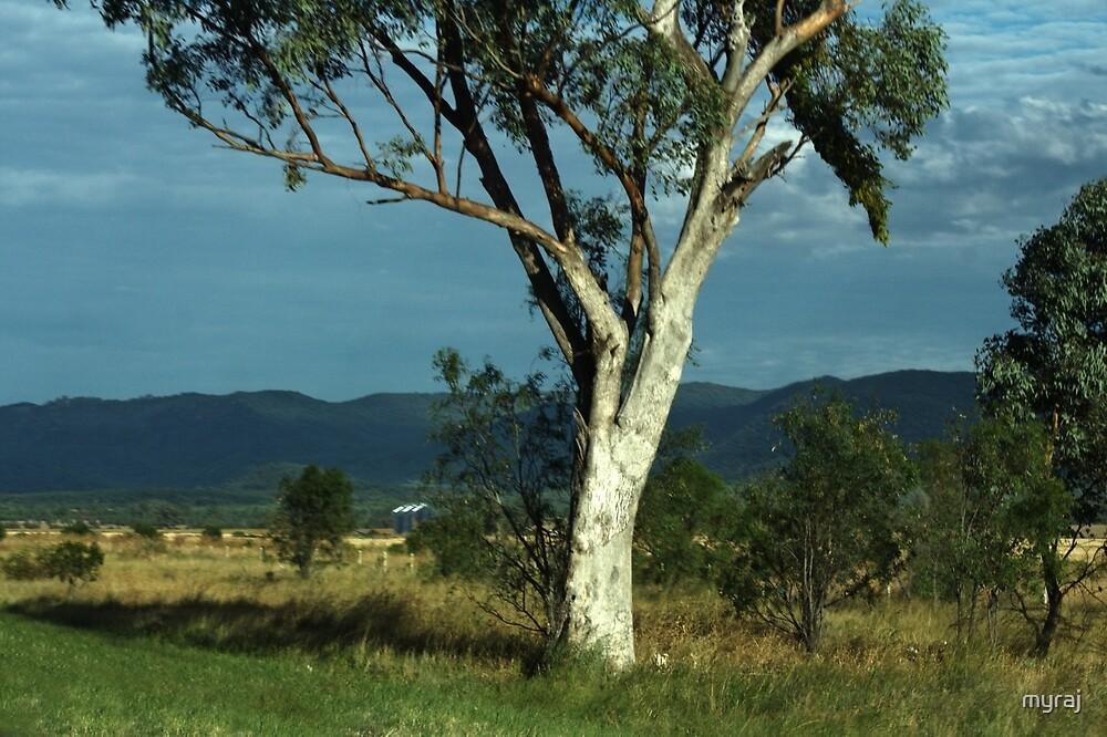 Along the road to Narrabri  by myraj