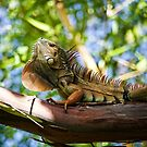 Out on a limb showing off by Bill Wetmore