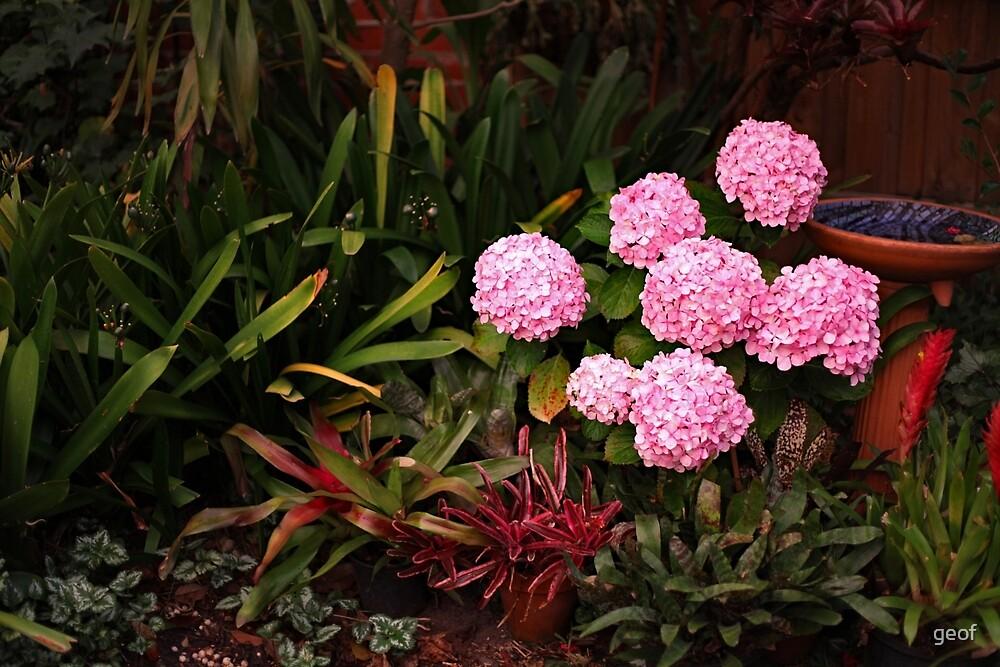 Lee's Garden. by geof
