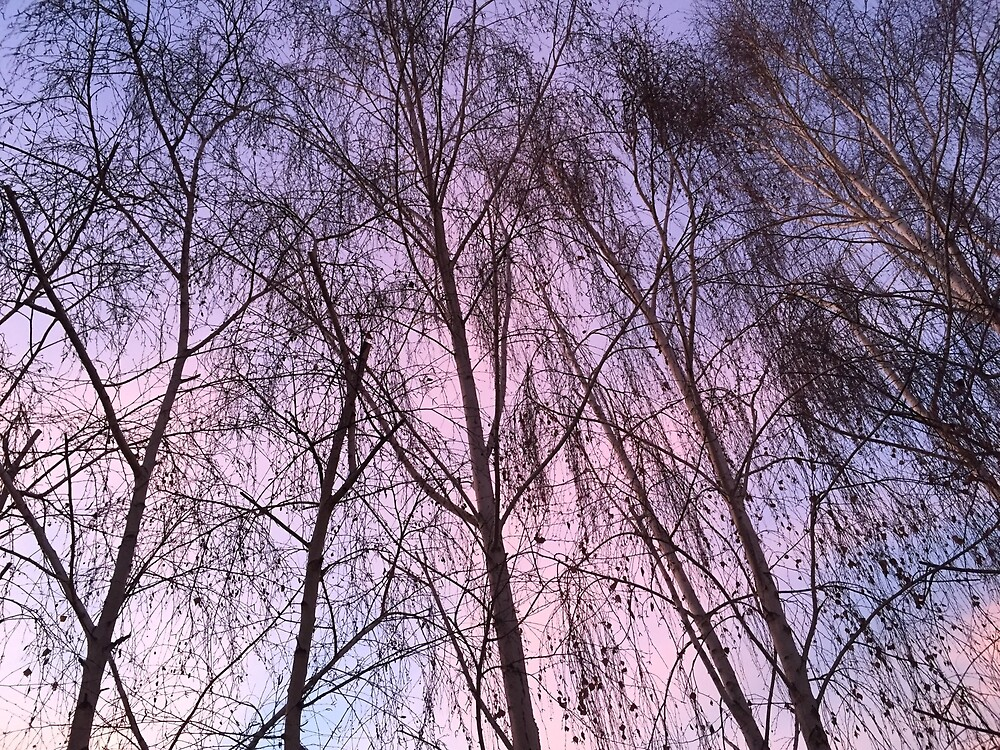 Purple Trees by Nosilarules