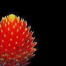 Fiery colored flower in the dark by Arie Koene
