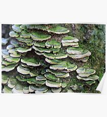 Green mushrooms Poster