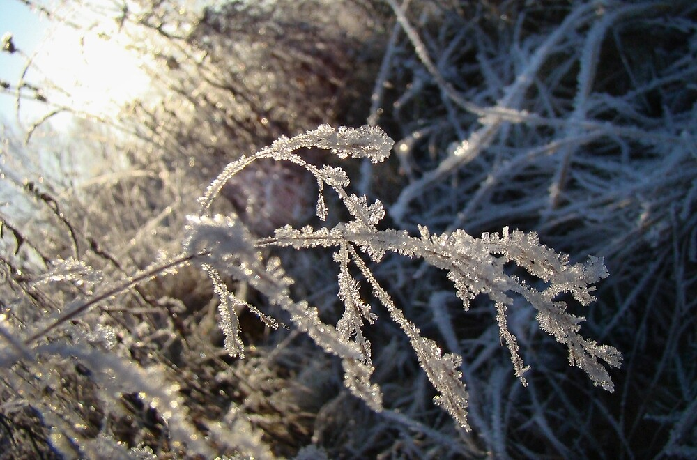 Frost on the grass. by GermanS