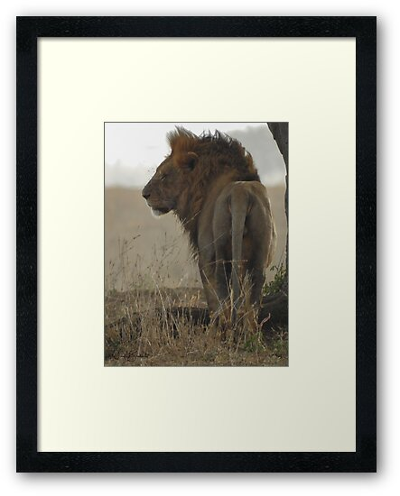 King of the Serengeti by Nicole Bambery