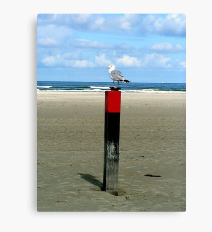 Rusty lock case guarded by a Seagull  Canvas Print