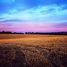 Field's of gold by Angela Lisman-Photography