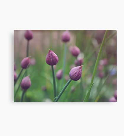 Chives. Canvas Print