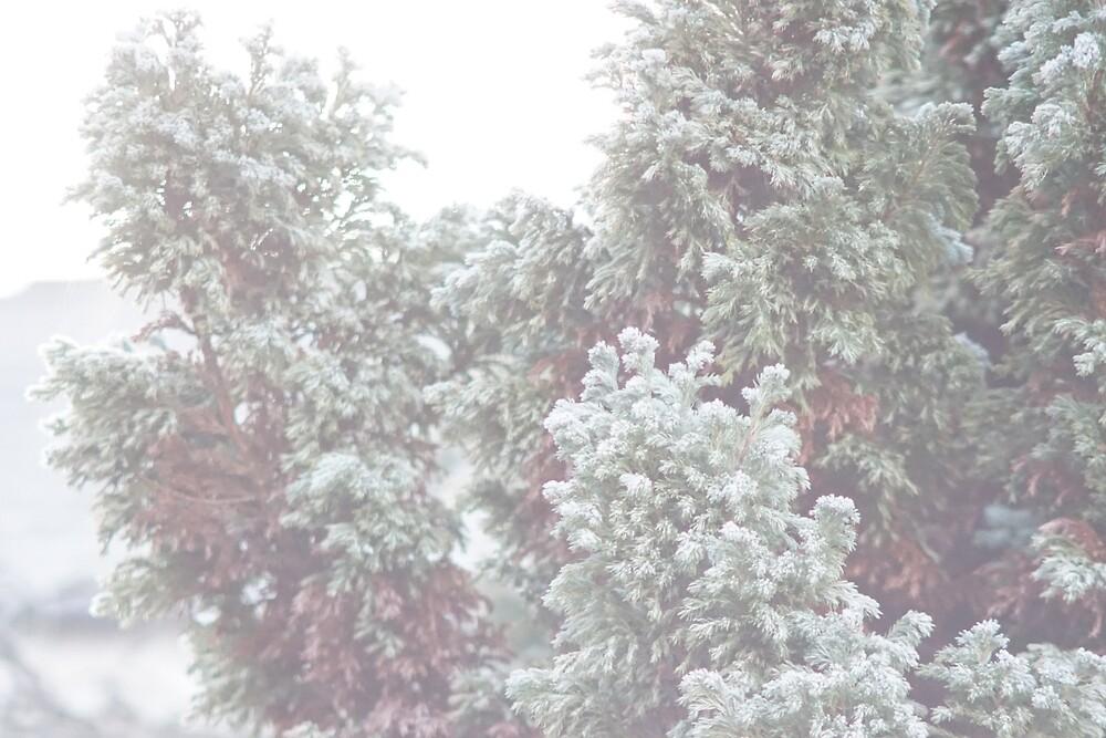 Winter Evergreen by Beautiful Britain