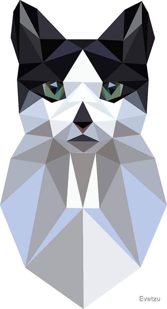 Kitty by Evetzu