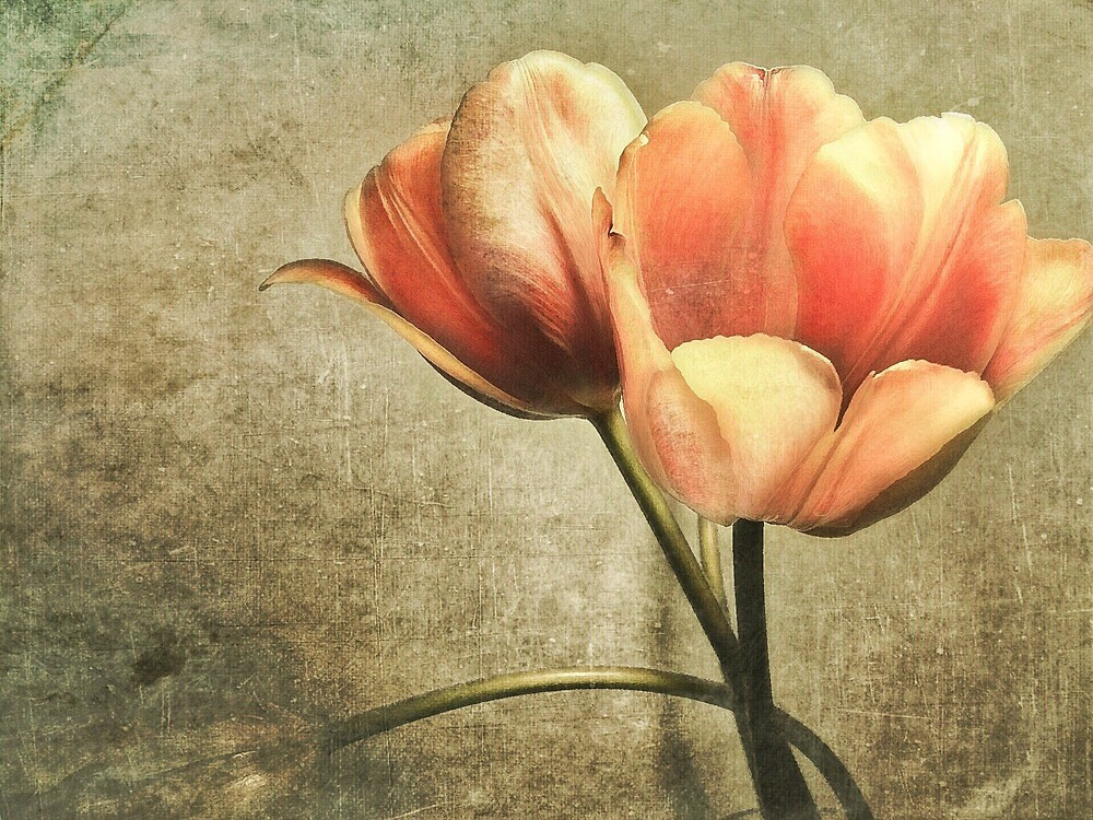 Tulips by Michael  Trombley