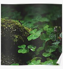 Oxalis and Moss Poster