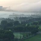 Foggy Morning by Loretta Golby