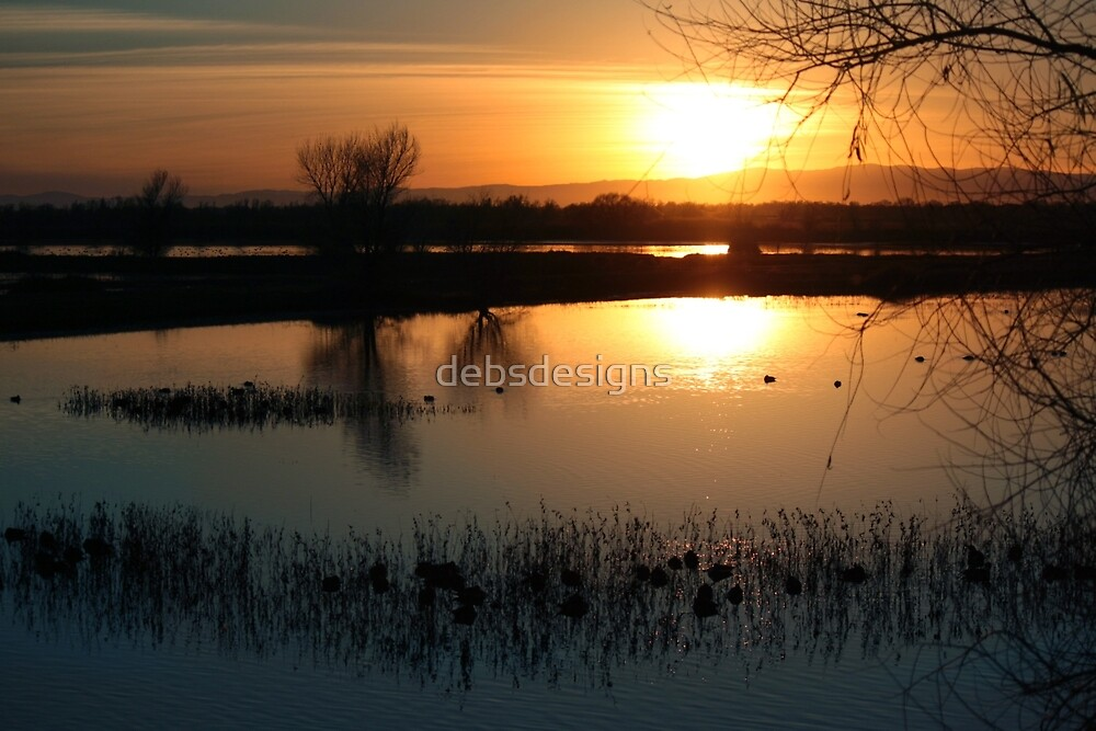 Sunset at the Bird Sanctuary by debsdesigns