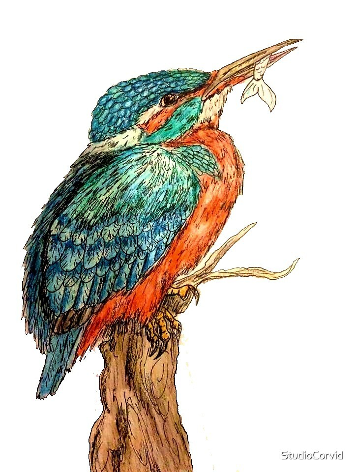 Watercolour and ink kingfisher by StudioCorvid