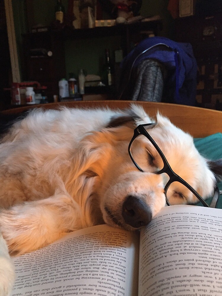 Studious Dog  by izwebbz