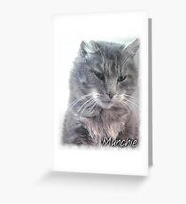 Munchie, the stray cat Greeting Card
