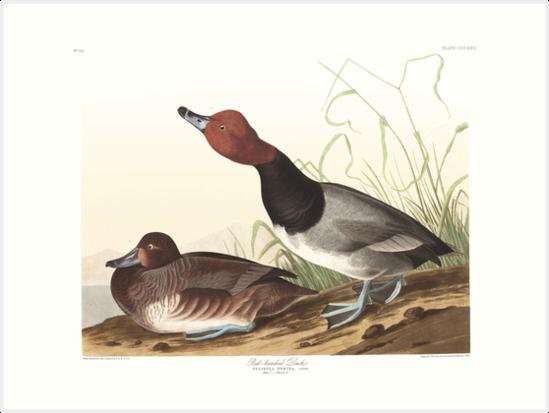 Readhead - John James Audubon by billythekidtees