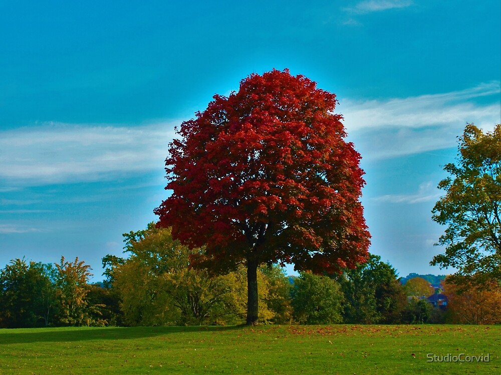 Scarlet tree by StudioCorvid
