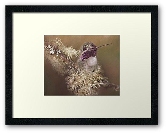 Costas Hummingbird Painted by TLWilsonPhoto