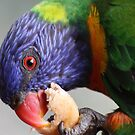 Rainbow Lorikeet by Michael Stocks