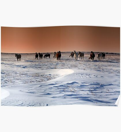Horse Sunset Poster