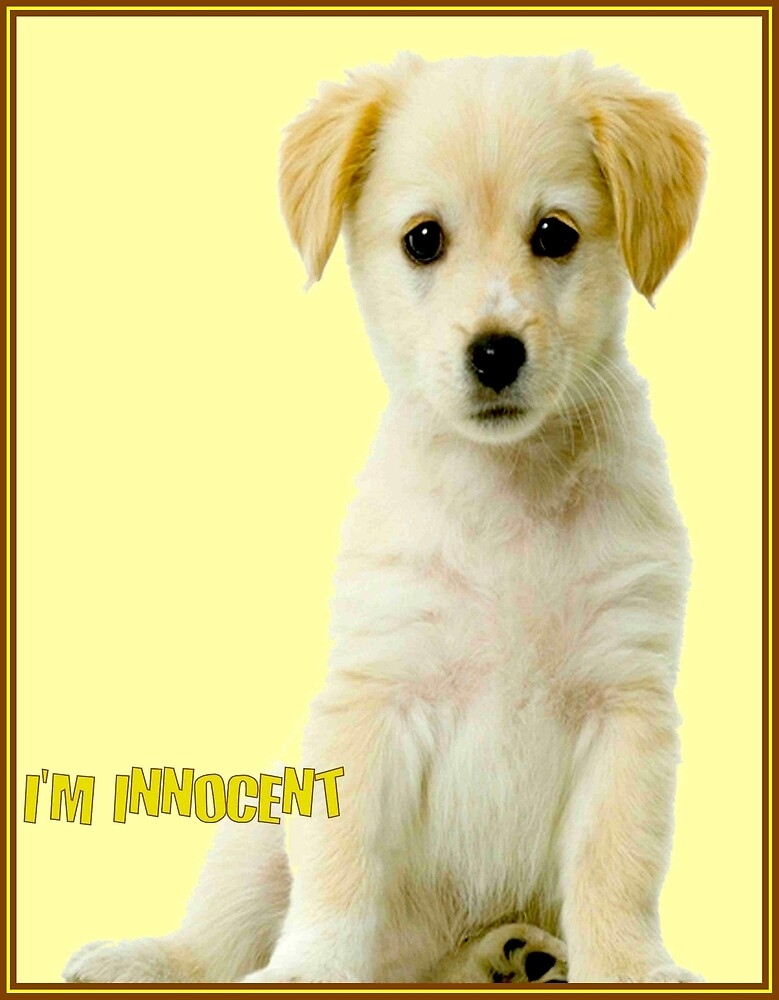 DOGS; I'm Innocent Poster Print by posterbobs