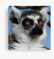Watching His Group - Ring-tailed Lemur Canvas Print