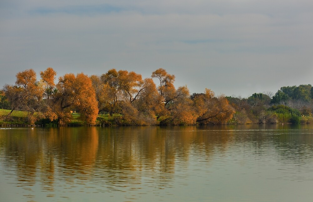 Fall trees reflection on wate by Layuee