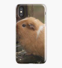 Guinea Pig iPhone Case/Skin