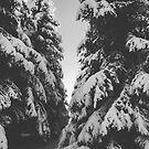 winter forest by Noirerora