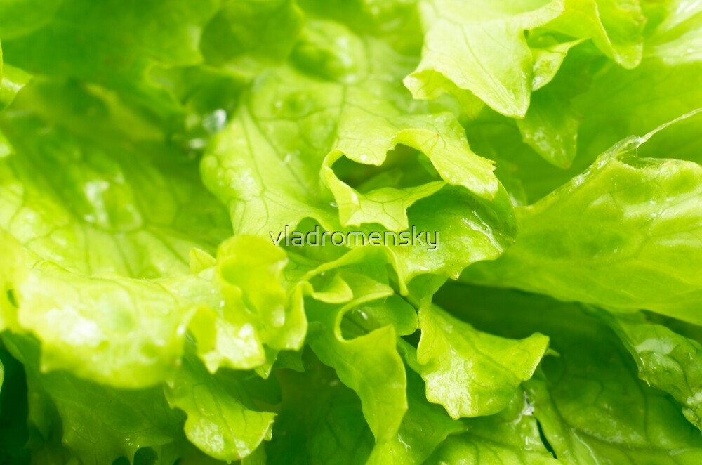 Macro view of the leaves of lettuce in a salad  by vladromensky