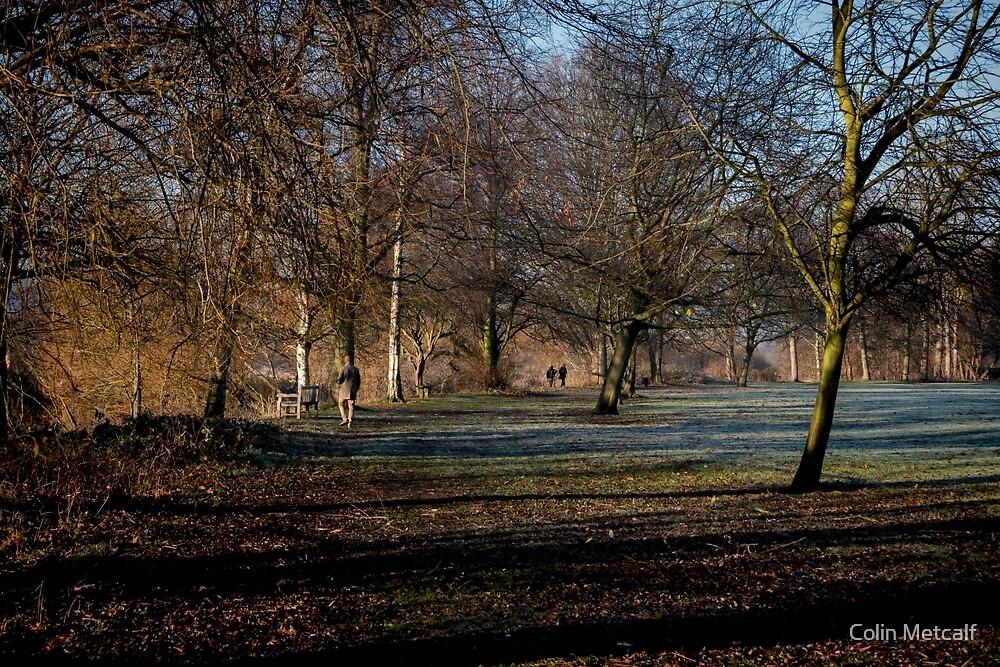 Winter Walk by Colin Metcalf