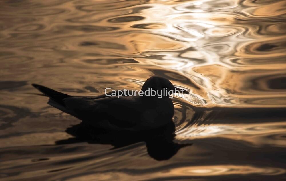 On Golden Pond by Capturedbylight
