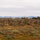 Home Sweet Home, Outback South Australia. by johnrf