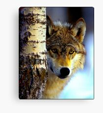 TIMBER WOLF; Vintage Wilderness Print Canvas Print