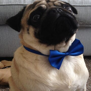 Pug wearing a bow by jety12567