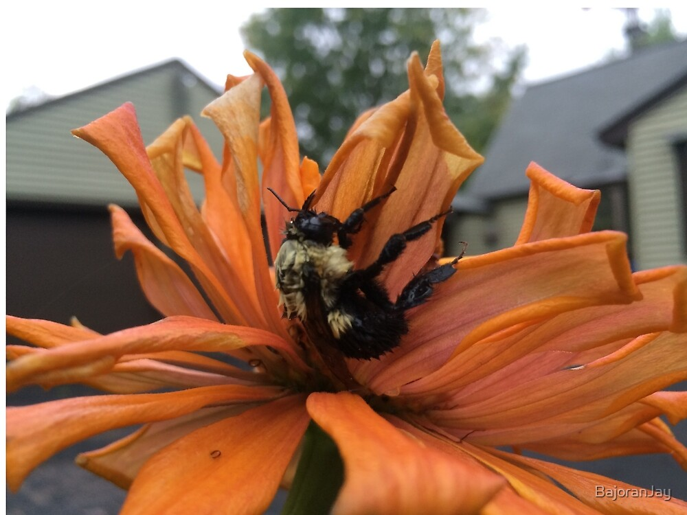 Pollinator Refuge by BajoranJay