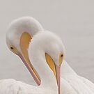 White Pelicans by SuddenJim