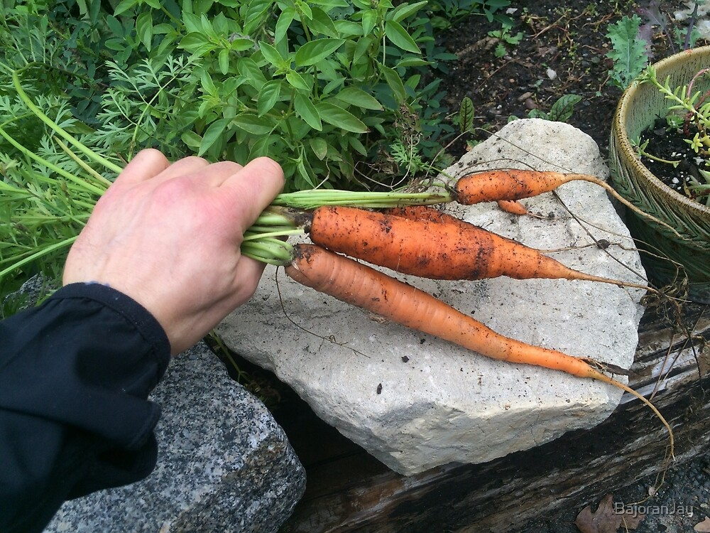 Grow Your Own Carrots by BajoranJay