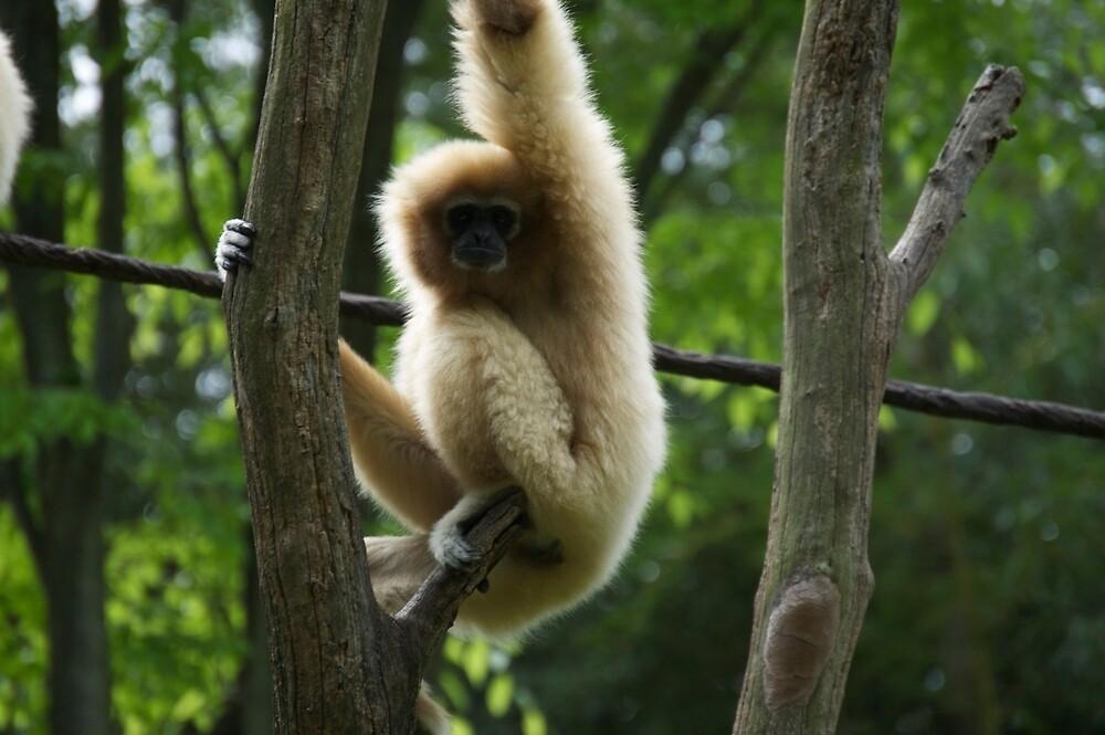 Monkey in the Trees by alyssajames18