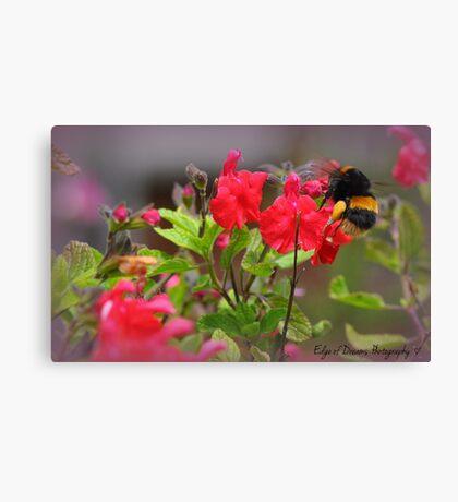 Bumble Bee Bum ~ Canvas Print