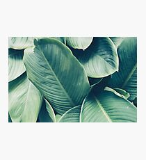 NATURE - GREEN - LEAVES - VEGETATION Photographic Print