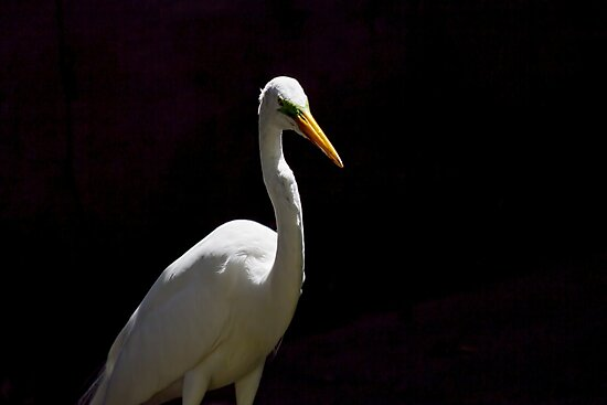 Egret by Philipe3d