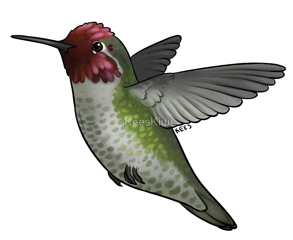 Anna's Hummingbird (Male) by KeesKiwi