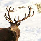 Antlers by vette
