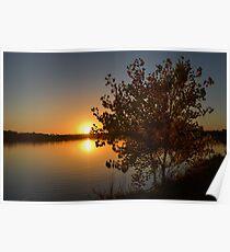 Fall Tree Sunset Reflection Poster