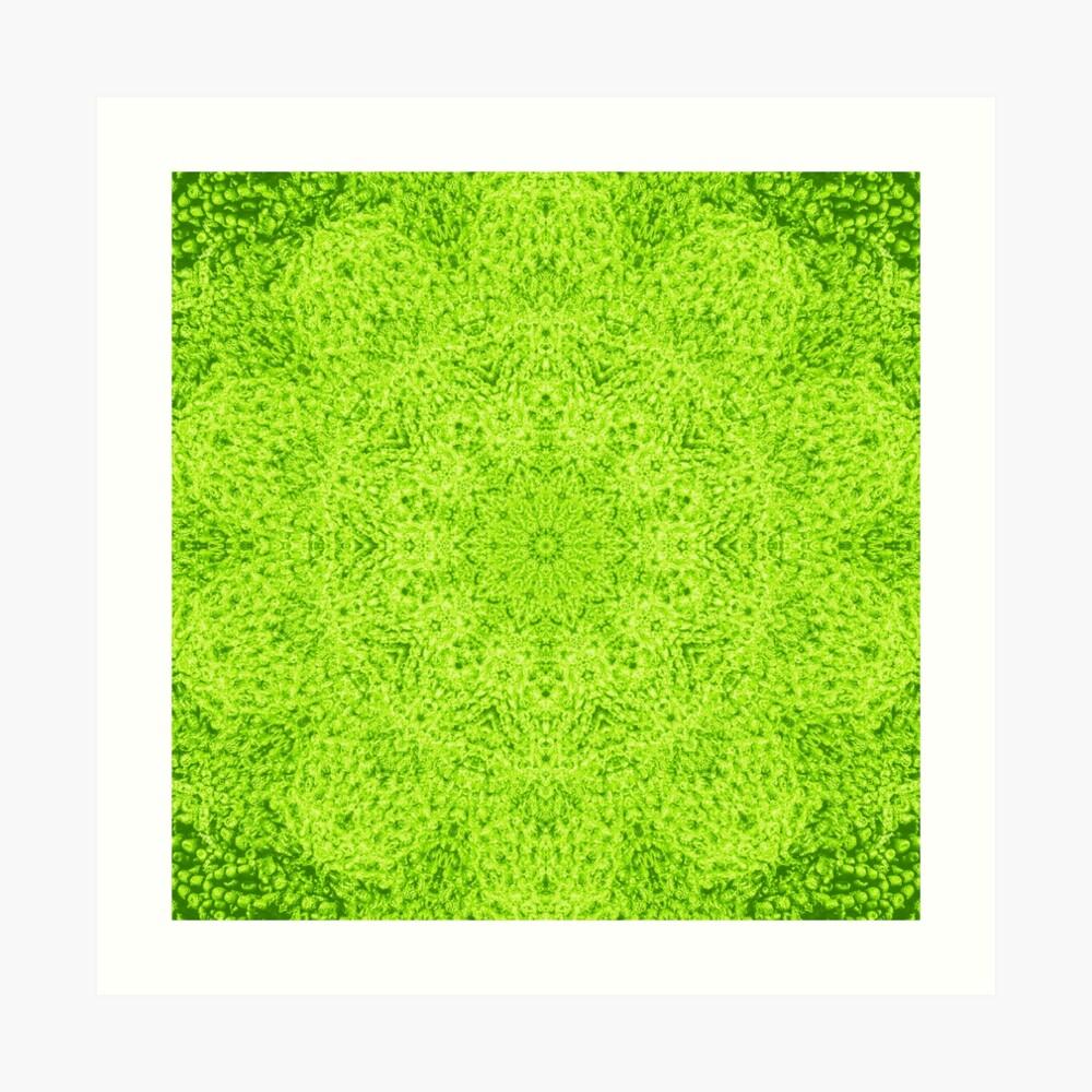 Limette Kunstdruck